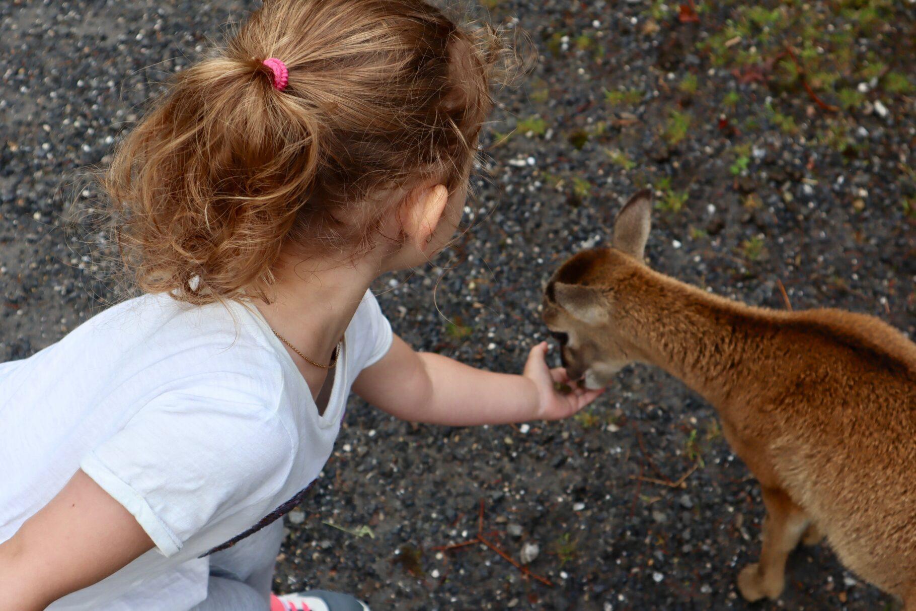 Natur- und Tierpark Goldau…
